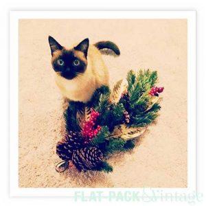 holidaycat